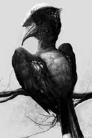 Hornbill by LindseyWArt