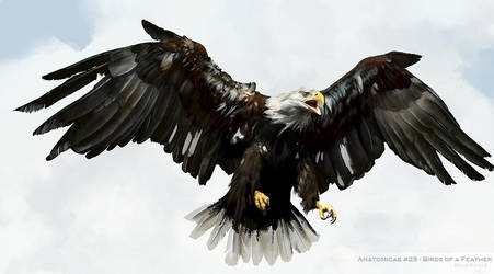 Bald Eagle Study by LindseyWArt