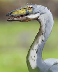 Dinovember: Coelophysis by LindseyWArt