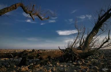 nature morte by qbfx