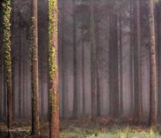 Trees by pinkygirls