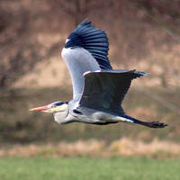 In Flight by EricReynolds