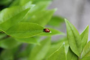 Ladybug 2 by letrainfalldown