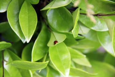 Ladybug 4 by letrainfalldown