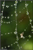 Alone in the web by Dark-Raptor
