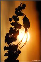 Sunset wit the spider by Dark-Raptor