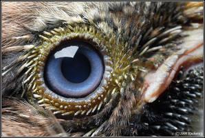Who am eye by Dark-Raptor
