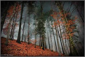 Beech forest II by Dark-Raptor