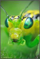 Rhogogaster viridis by Dark-Raptor