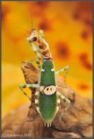 Creoboter gemmatus II by Dark-Raptor