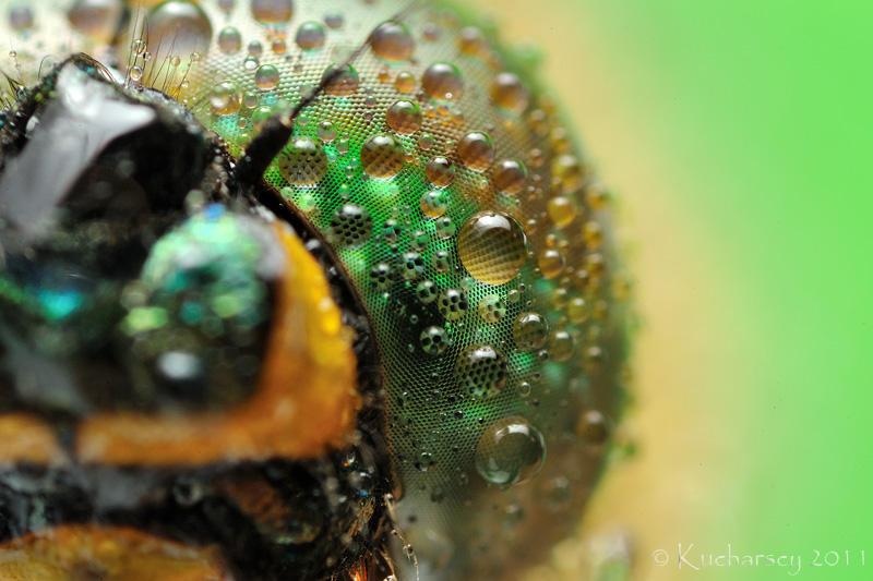 Droplets by Dark-Raptor