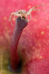 King of the apple by Dark-Raptor
