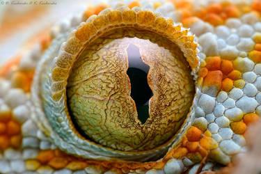My eye by Dark-Raptor