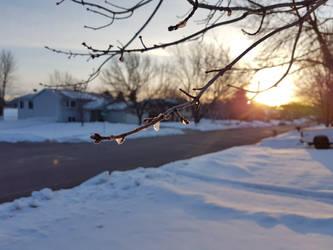 Winter wonderland by sammy-the-sam