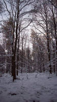 November Snow 04 by mattyhex