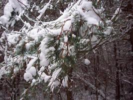 November Snow 05 by mattyhex