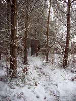 November Snow 06 by mattyhex