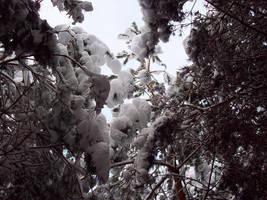 November Snow 07 by mattyhex
