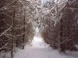 November Snow 08 by mattyhex