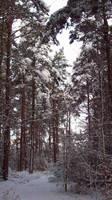 November Snow 10 by mattyhex