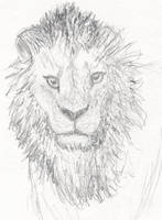 Lion Sketch by mattyhex