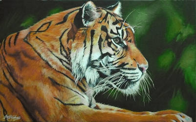Tiger by Lorna-Marie