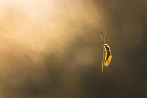 Golden wings by donlope01