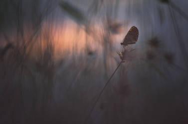Crepuscule by donlope01