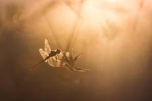 Sun bath by donlope01
