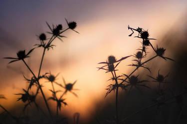 Evening light by donlope01