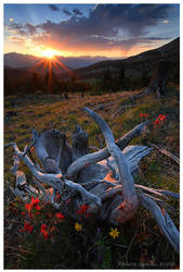 Twisted Sunset by Nate-Zeman