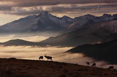 Dawn of Winter by Nate-Zeman