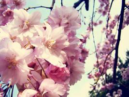 blossom by hemingwaycafe