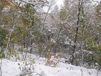 October snow 10 by crazygardener