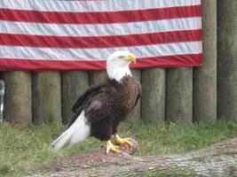 338 Homosassa State Wildlife Park by crazygardener