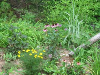 back yard garden by crazygardener