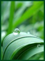Raindrop by Hardia-999
