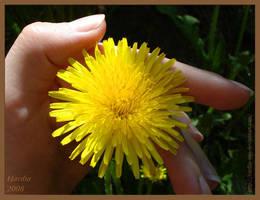Sunny in my hand by Hardia-999