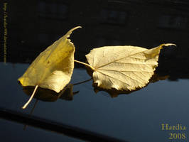 Two leafs by Hardia-999