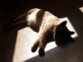 resting elegance by MindaugasR