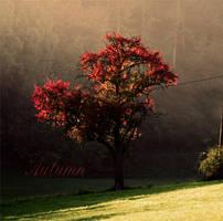 Autumn by z00m0ut