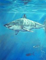 sharkweek by RMBDarkmyth