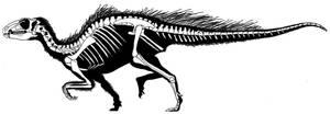 Heterodontosaurus Skeleton by PaleoAeolos