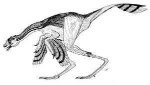 Caudipteryx by PaleoAeolos