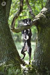 Tarzan by luciekout