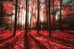 Autumn by luciekout