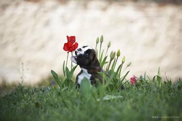 Little tulip killer by luciekout