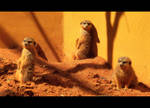Meercat Supermodels. by hybridgothica