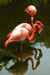Flamingos 03 by otas32