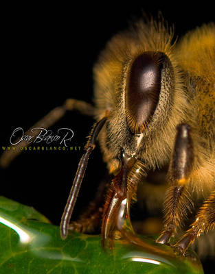 Nom Nom Bee by otas32
